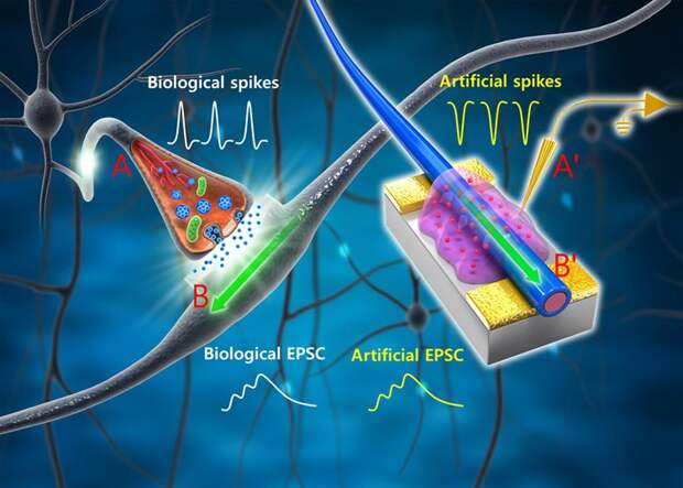 Успехи в области искусственного интеллекта и нейробиологии