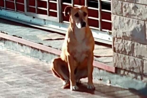 Собака ждёт хозяйку возле её работы. А люди не знают, как дать понять псу, что она больше не придёт
