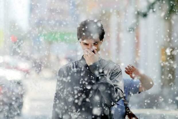 Врачи предложили способы борьбы с аллергией на тополиный пух