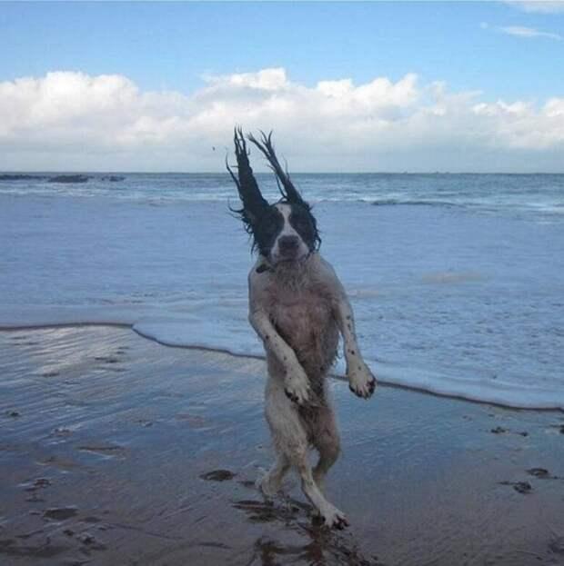 19 забавных животных, которых сфотографировали в идеальный момент