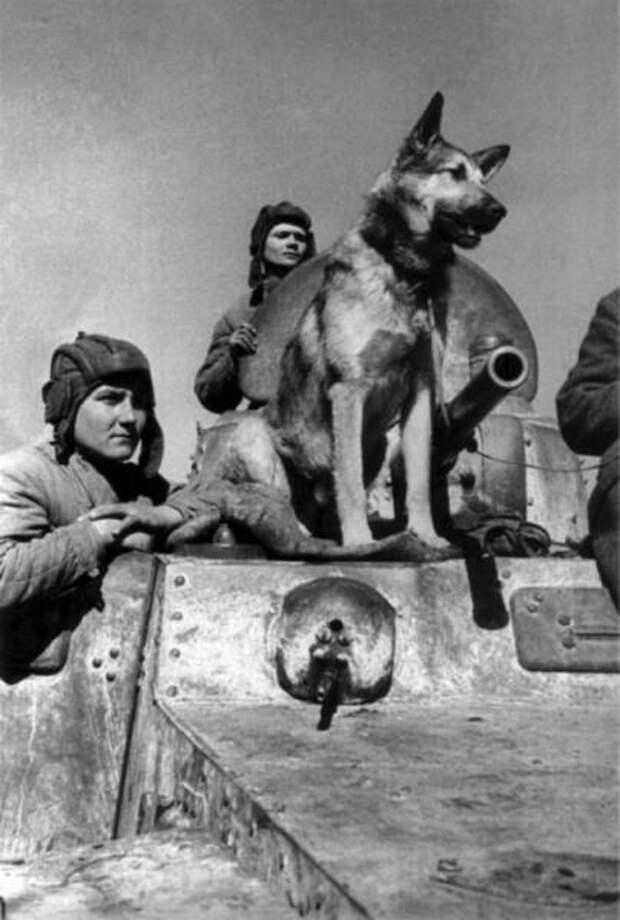 Какие животные стали героями Второй мировой войны и помогли приблизить победу над фашизмом?