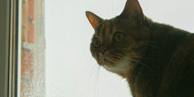 В Японии кошку на день назначили начальником полиции (ВИДЕО)
