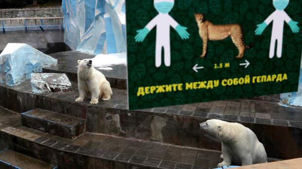 Медведя погладить не хочется?Запад язвит о побочках вакцины, отчаянно завидуя русским
