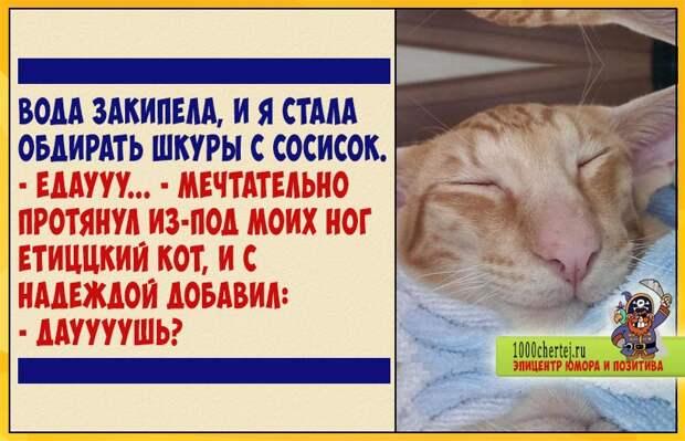 Етиццкий кот и половина варёной сосиски