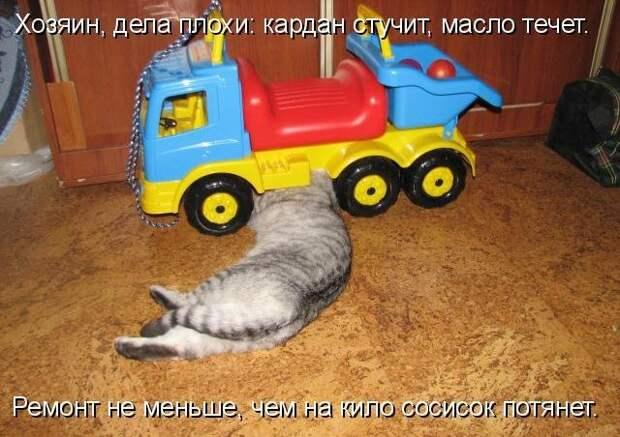 1450431465_kotomatrica-17