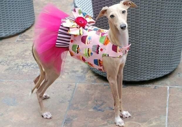 Эти модники отлично разбираются в последних трендах. животные, милота, собаки