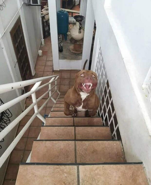 Собака-демон.