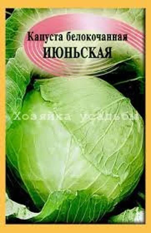 Ранние сорта белокочанной капусты, что посадить