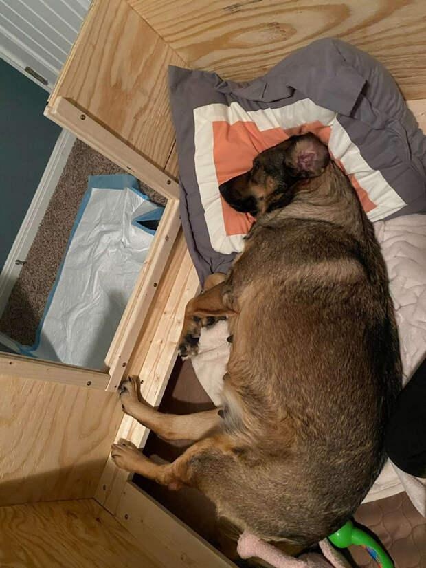 Пара из Техаса провела 12 часов в машине, чтобы их собака родила в тепле.