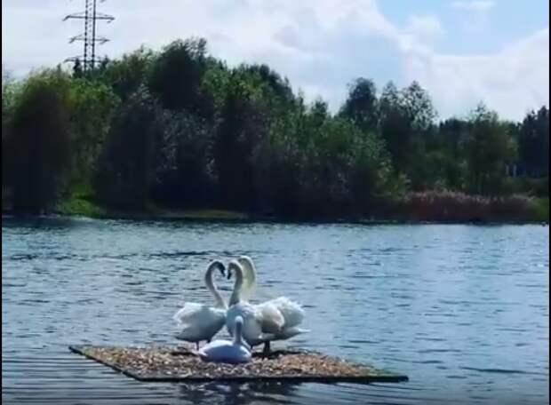 Фото дня: лебединый квартет Пенягинского пруда