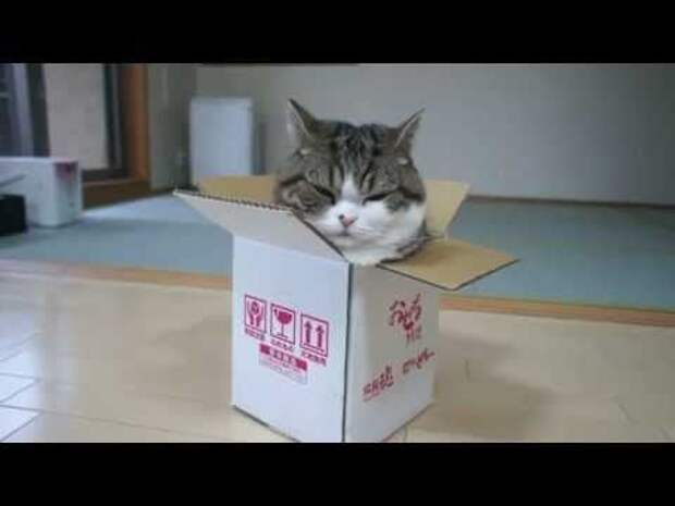 Котик и коробка! Забавное видео!