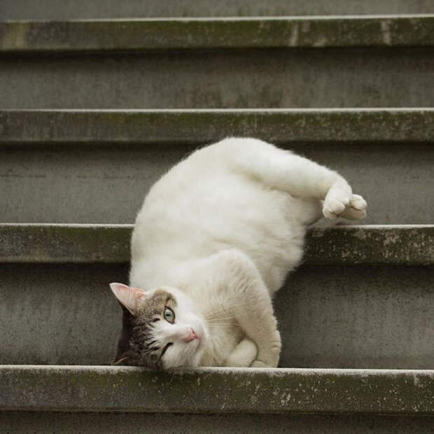 Японский фотограф снимает бездомных котов на улицах Токио
