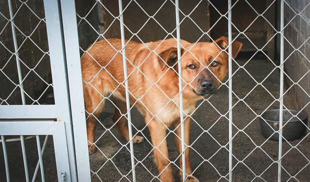 Крик о помощи. Программа стерилизации бездомных животных в Омске под угрозой срыва