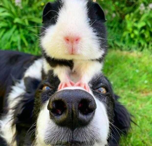 9 фото смешных, добрых и трогательных собачек, которые вызовут у вас улыбку