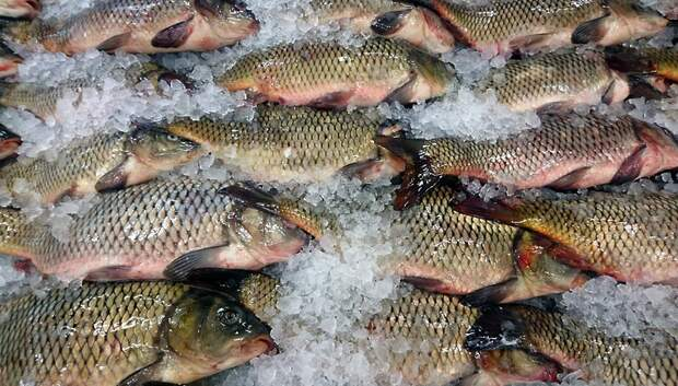 Объем поддержки предприятий по выращиванию рыбы в Подмосковье увеличили в 2020 году