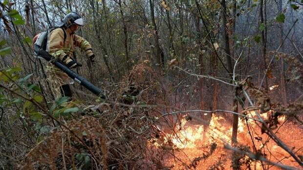 Площадь пожара в нацпарке «Хвалынский» выросла до трех гектаров