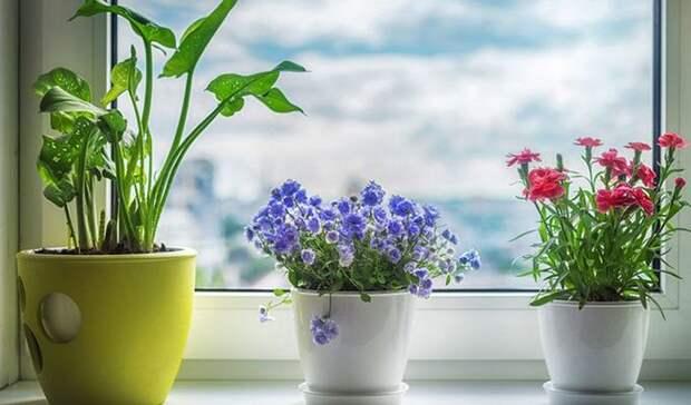10 вещей, которые улучшат энергетику вашего дома