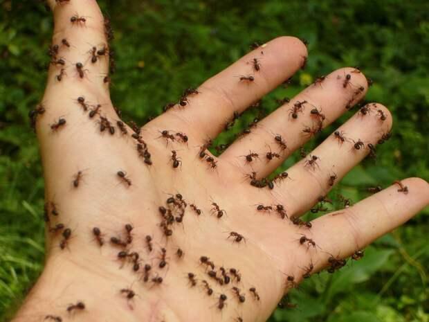 Избавилась от муравьёв в сарае и огороде. Причём тут банановая кожура