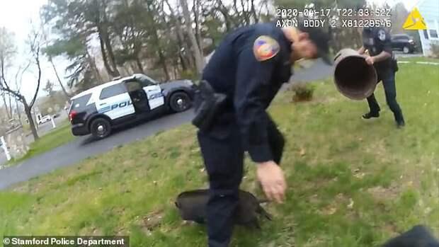 Веселое видео: полицейские тщетно пытаются поймать ловкого поросенка