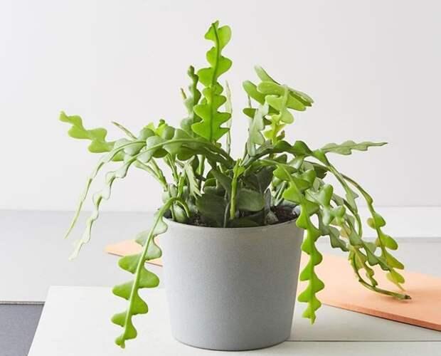 15 необычных и очень красивых растений для тех, у кого ″есть все″