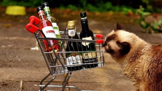 Продажи алкогольных напитков в России снизились