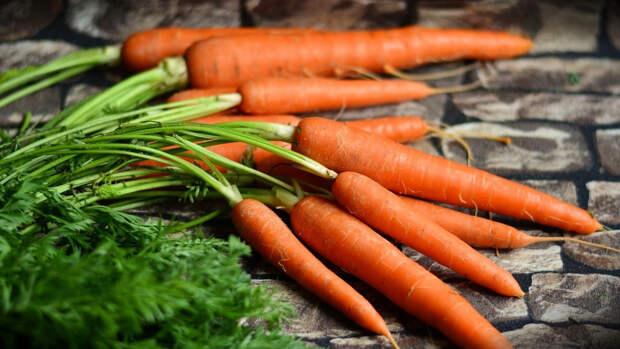 Офтальмолог Куренков оценил эффективность моркови в восстановлении зрения