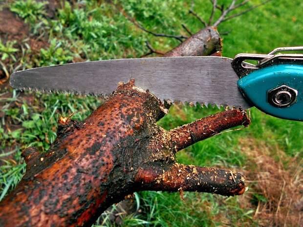 Во дворе на Амундсена удалили аварийные деревья