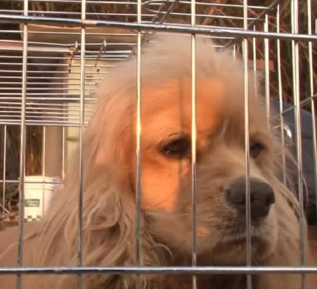 Собака за решеткой