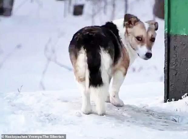 Брошенный пес полгода ждал хозяина на остановке, и наконец дождался чуда верность, грустно, животные, истории, собака, собаки, трогательно, хатико