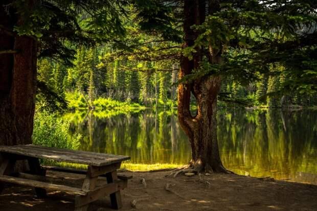 bench-2178847_1280-1024x683 Деревья благотворно влияют на развитие и психическое здоровье детей