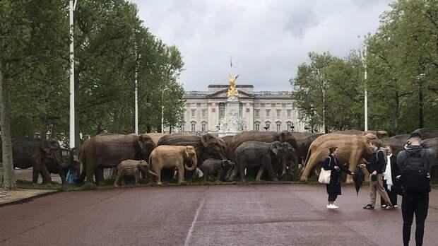 """Стадо из ста """"слонов"""" появилось возле Букингемского дворца в Лондоне"""