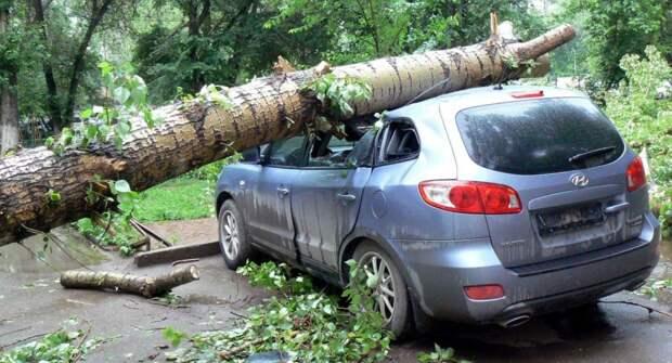 Что делать, если на транспортное средство во дворе упало дерево