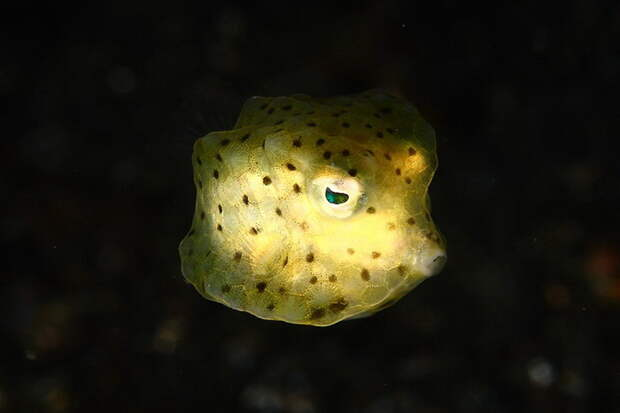 Подводный мир Индонезии