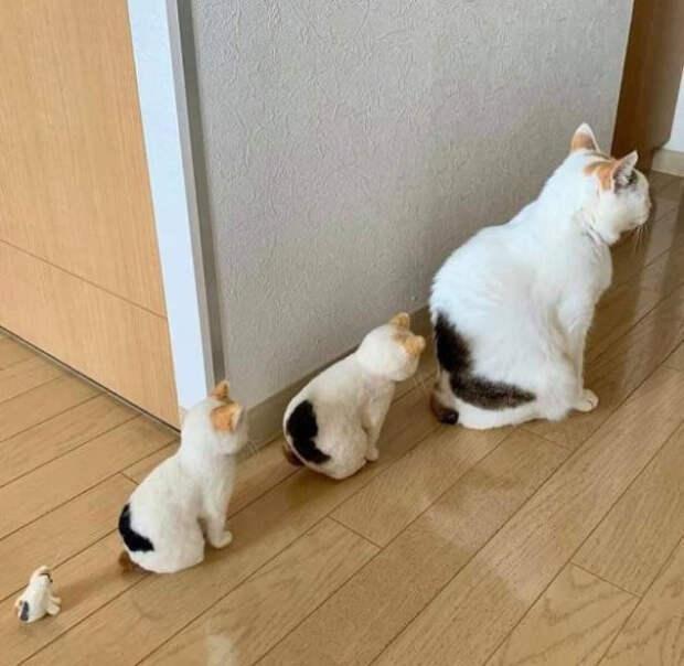 Котейки для хорошего настроения (13 фото)