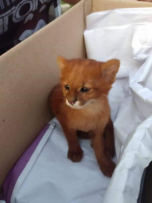 Девушка думала, что спасла необычайно красивого котенка, а тот оказался ягуарунди
