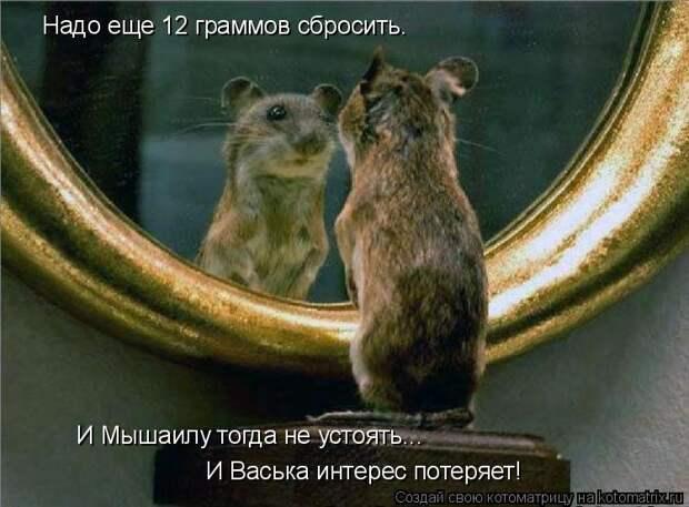 Котоматрица: Надо еще 12 граммов сбросить. И Мышаилу тогда не устоять... И Васька интерес потеряет!