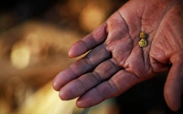 10 рек России, где можно намыть золото. От Сибири до Подмосковья