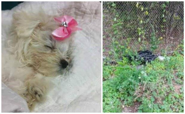 Она засунула щенка в пакет и выбросила из окна машины на обочину жестокость, наказание, собачка