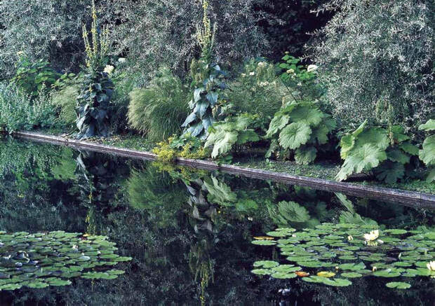 Растения с серебристыми листьями. Серые цветы — травы и полыни