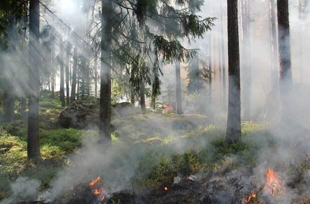 Дымом от пожаров в Китае затянуло приграничные районы Амурской области