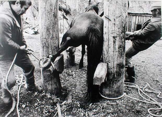 Запрещенные снимки культового литовского фотографа Витаса Луцкуса