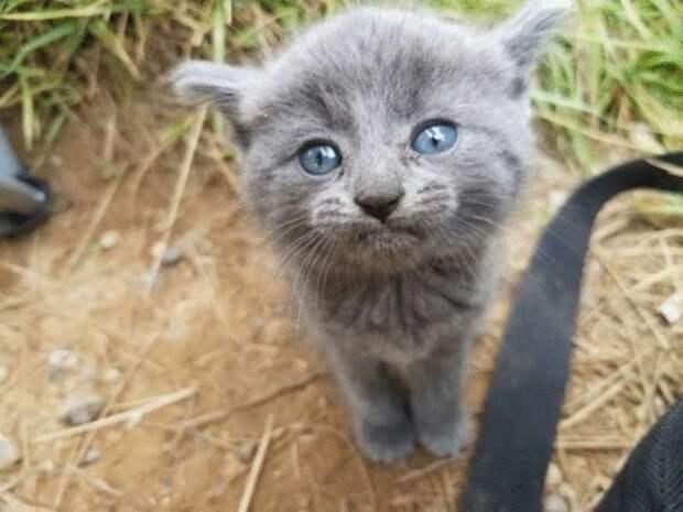 Бездомный котенок сам выбрал себе дом. Он решил, что рыбачивший рядом мужчина его хозяин…