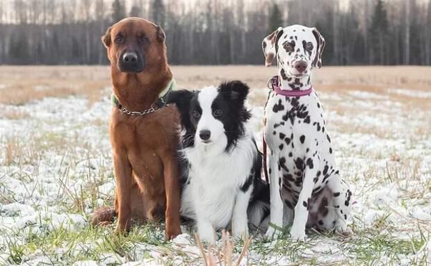 Собаки поняли команду слишком буквально! Забавная история