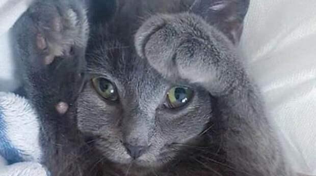 Кошечка жалобно «плакала» у дверей чужого дома: она устала жить на улице в одиночестве