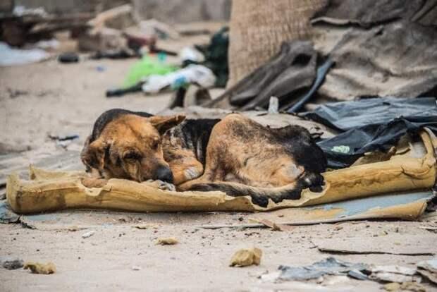 Слепая собака целый месяц жила на мусорной свалке