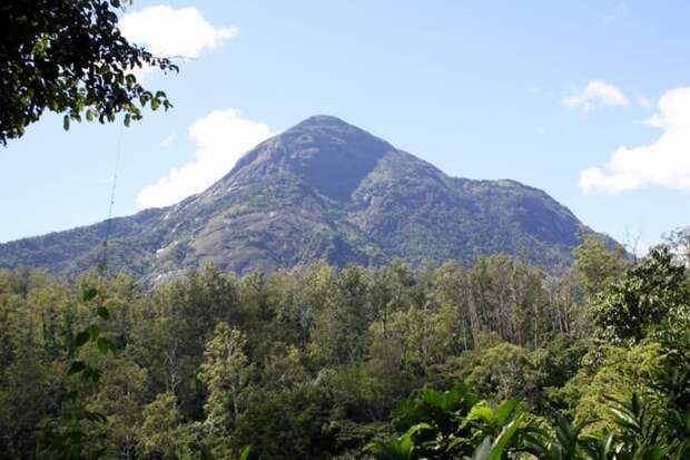 Затерянный лес горы Мабу часто называют «лесом Google»