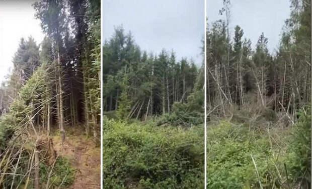 Мужчина обнаружил в лесу место посадки НЛО