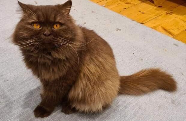 Напобережье Британии нашли кота изРоссии, который преодолел более 3000 км