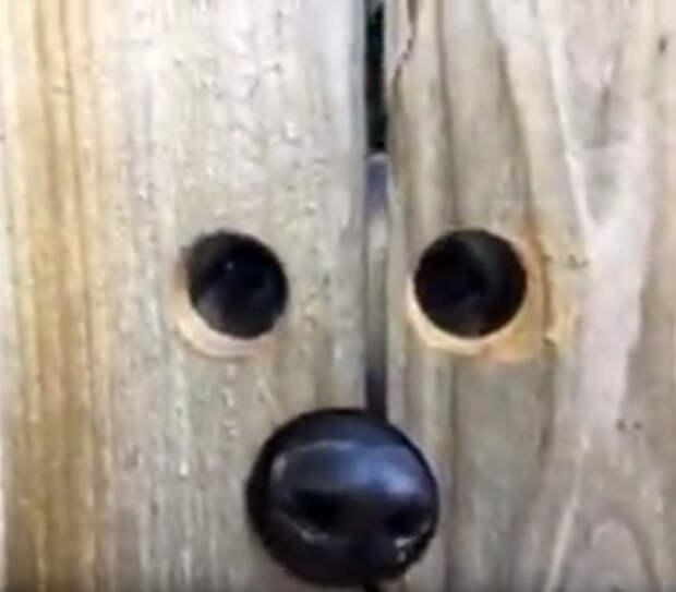 Соседский пес стал подглядывать, что происходит во дворе девушки. И тогда она взяла в руки дрель