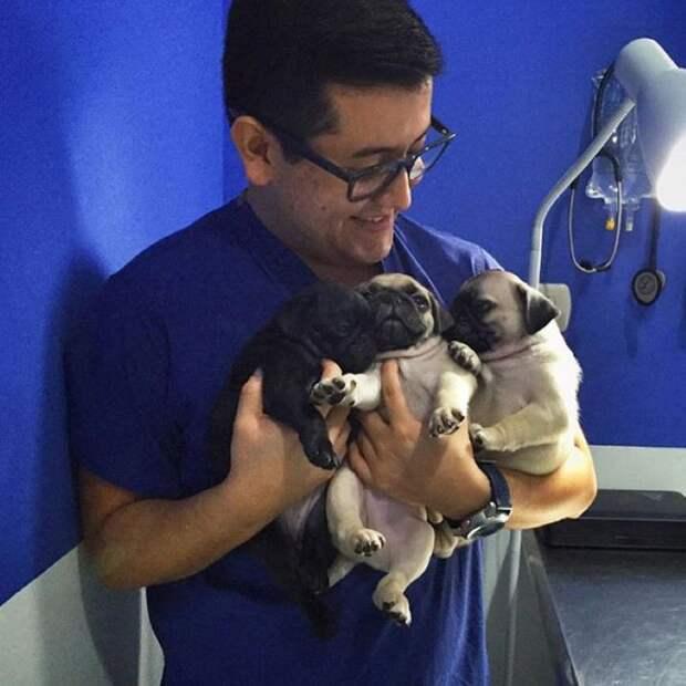 20 милых доказательств того, что ветеринар— это улетная профессия